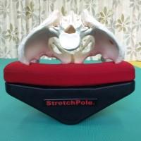 スイングストレッチ,セミナー,骨盤の安定