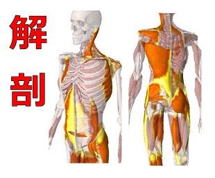 現場で使える解剖セミナーのイメージ